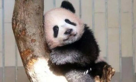 盘点日本几处知名动物园,小动物真是治愈啊